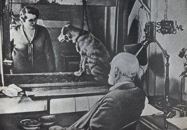 cane-di-pavlov-e-misofonia